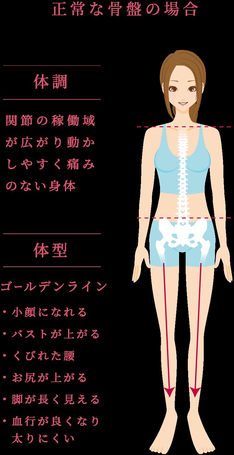 正常な骨盤の場合